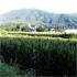 hukushima_s