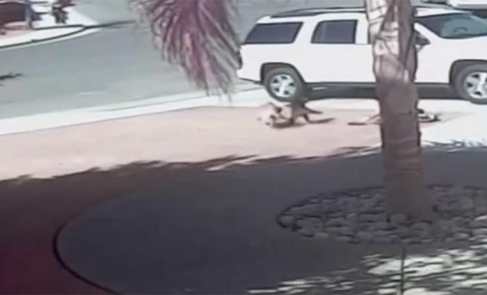 犬が子供を襲い引きずり回す